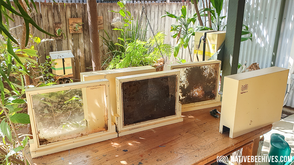 Sugarbag Bees Observation Hive - Native Bee Hives