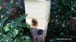 nativebeehive19042015b