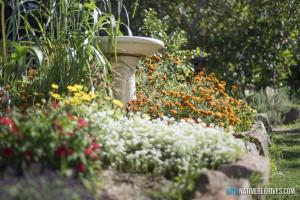 nbh marigoldflowergarden