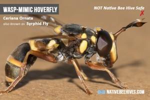 nbh pestsgraphic mimicwasp