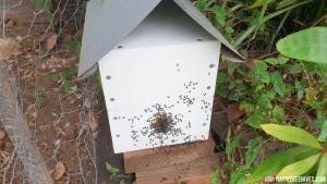 nbh pollinationbox 10012019b