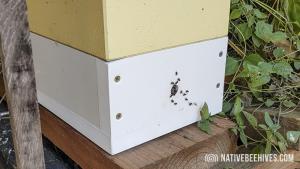 nbh pollinationbox 29072018