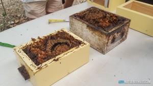 nbh sugarbag workshop 200117 3